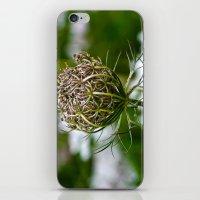 Wild Carrot iPhone & iPod Skin