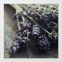 Lavender Harvest Canvas Print