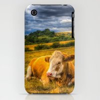 iPhone 3Gs & iPhone 3G Cases featuring Resting Cows by David Pyatt