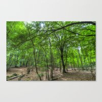 The Ancient English Forest Canvas Print
