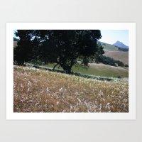 California Live Oak Art Print
