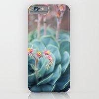 Echeveria #1 iPhone 6 Slim Case