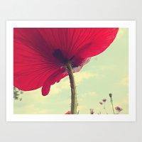 Red Poppy, Blue Sky Art Print