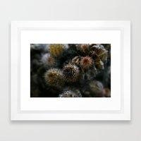 Prickly points Framed Art Print
