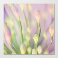 Lavender Nile Canvas Print