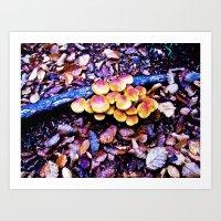 Fungi nature. Art Print