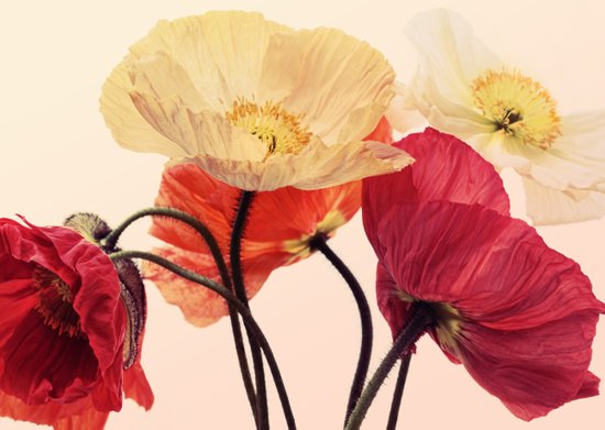Posing Poppies - bright, vintage toned poppy still life Art Print