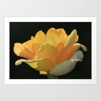Yellow Rose Art Print