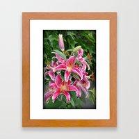 Star Lillies Framed Art Print