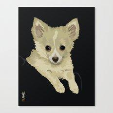 Long Hair Chihuahua Canvas Print