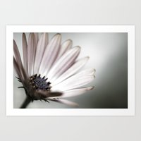 pink daisy. Art Print