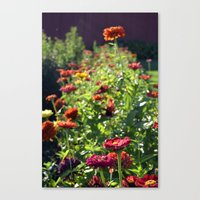 Fall Zinnia's  Canvas Print