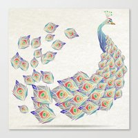 white peacock Canvas Print