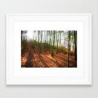 Autumn Sun And Shadows Framed Art Print