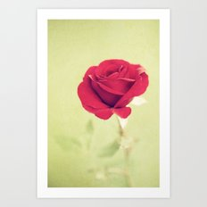 Perfect Rose Art Print