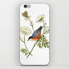 Nuthatch and Carrot iPhone & iPod Skin