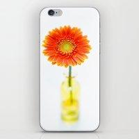 Aglow In Wintertime iPhone & iPod Skin