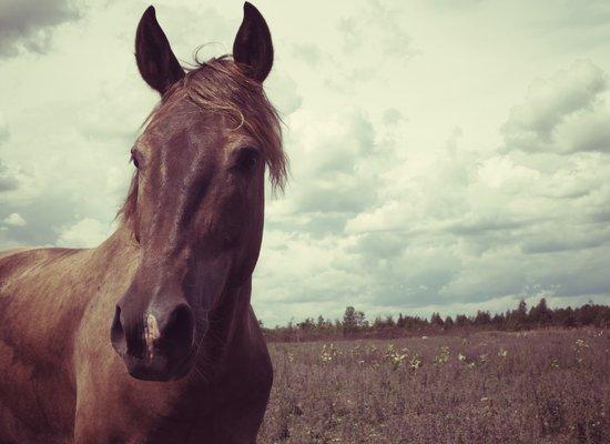 Portrait of a Horse Art Print