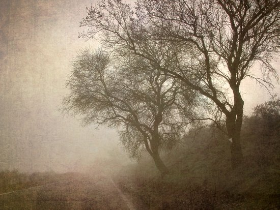 Vigilants Trees in the misty road Art Print
