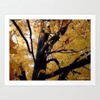 October Branches Art Print