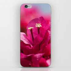 Bougainvillea 843 iPhone & iPod Skin