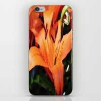 Garden Fire iPhone & iPod Skin
