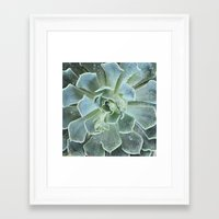 Succulents II  Framed Art Print