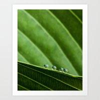 four dew drops Art Print
