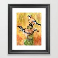 European Jays Framed Art Print