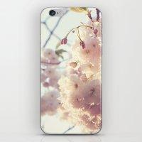 sunlit cherryflowers iPhone & iPod Skin