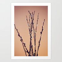Pussy Willow Art Print