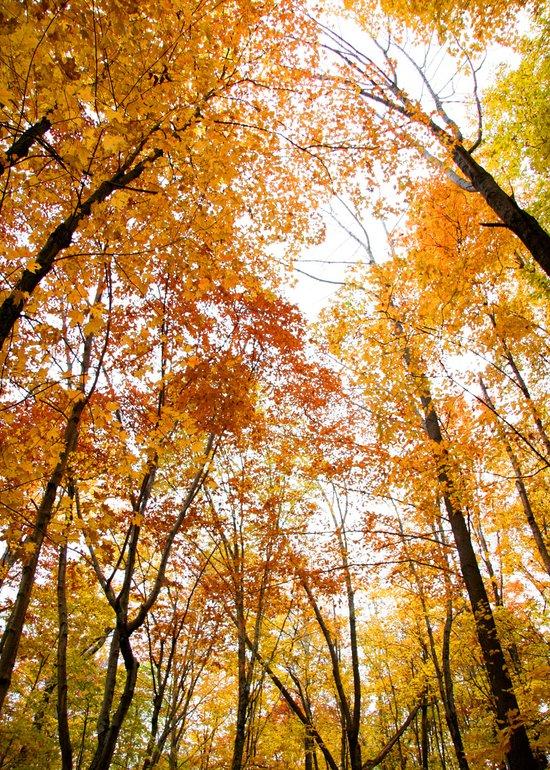 Maples Reach - Creation Sings Art Print
