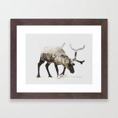 Arctic Reindeer Framed Art Print
