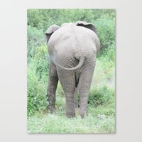 Elephantail Canvas Print