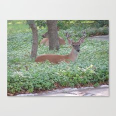 Here's Looking at You! Canvas Print