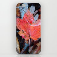 autumnal reverie 646 iPhone & iPod Skin