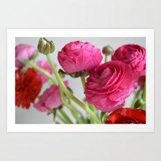 Ranunculus Art Print