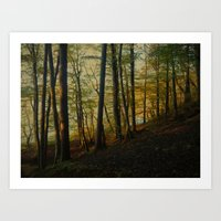 Autumn In The Woods Art Print