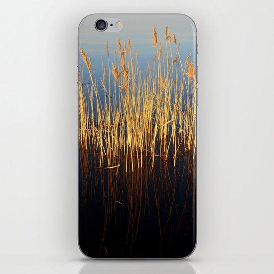Water Reeds iPhone & iPod Skin