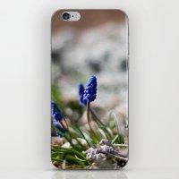 Grape Hyacinth iPhone & iPod Skin