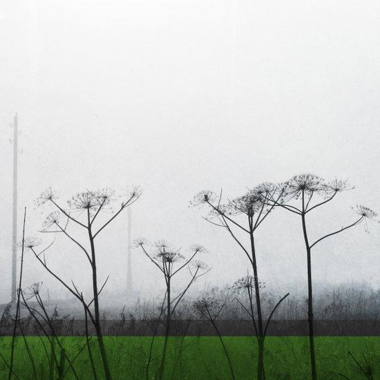 Fields #2 Art Print
