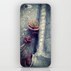Suculent flowers iPhone & iPod Skin
