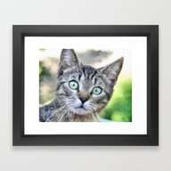 Framed Art Print featuring Wide Eyed Cat by Regan's World