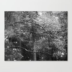 Spring Veins Canvas Print