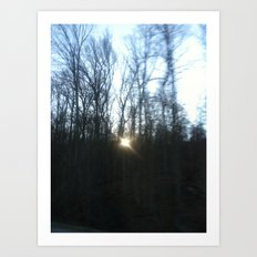 Southern Forest Sunset Art Print