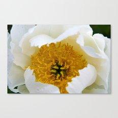 White French Poppy Canvas Print