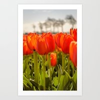 Tulips standing tall Art Print