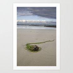 kelp cluster Art Print
