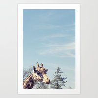 giraffe... Art Print