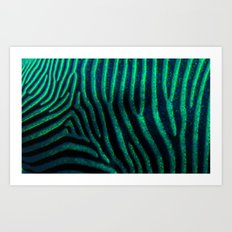 Zebra Path Art Print